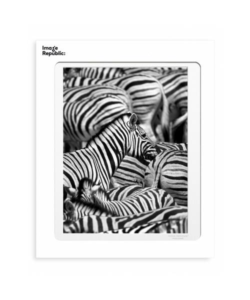 """La Galerie """"Zebre"""" 30x40cm"""