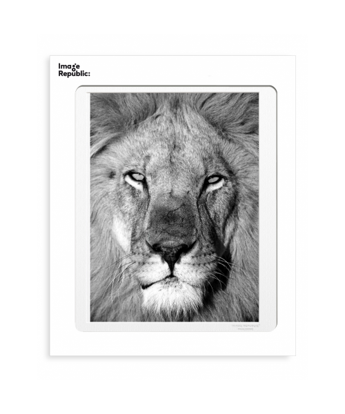 """La Galerie """"Lion 1"""" 30x40cm"""