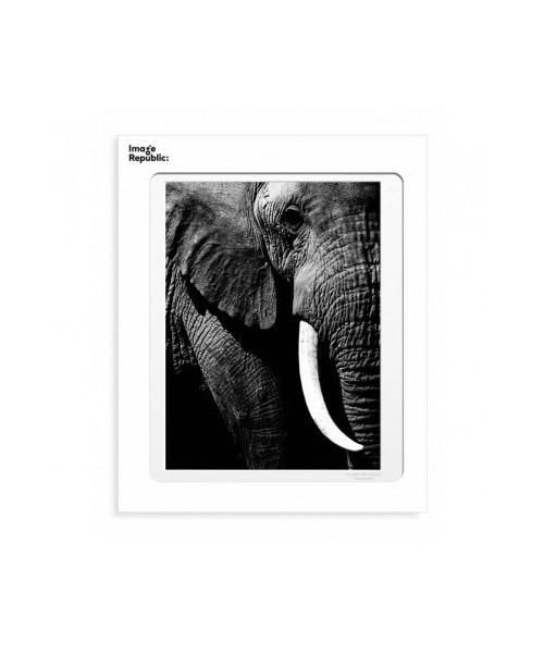 """La Galerie """"Elephant Zoom""""..."""